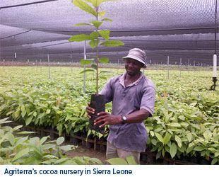 Agriterras Cocoa Nursery