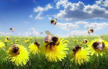 Bees Could Send Food Prices Soaring