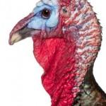Food Turkey