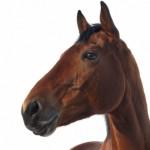 Horse Q