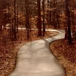 Hidden path woods forest