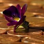 pennies flower