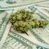 Marijuana penny stocks cash