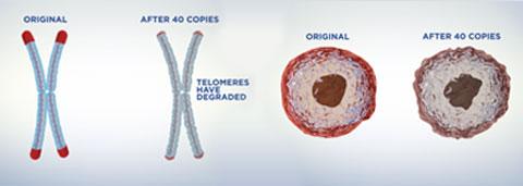 telomeres gene
