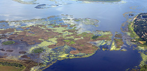 How Florida's Algae Blooms Are About to Turn into an Energy Boom