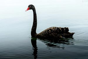 Stock Market Crash History: 9 Black Swan Events That Wiped Out Trillions