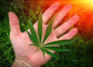The Top 10 Marijuana Penny Stocks in 2016