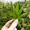 recreational marijuana sales in Nevada