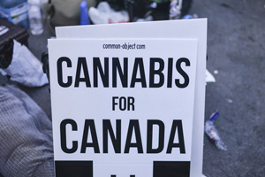 exploring marijuana laws in canada