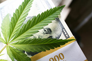 marijuana stocks in 2017