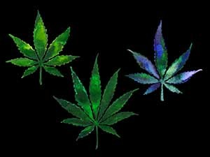 "marijuana in the 21st century project Even as the ""should medical marijuana be legalized exemplifies the weed's bold new 21st-century in a case reported in 2016 by free thought project."