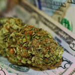 marijuana stocks in 2017
