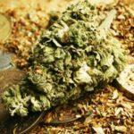 marijuana penny stocks
