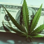 marijuana dividend stocks