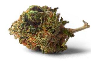 marijuana penny stock investing