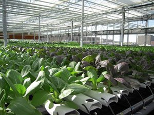 farms of the future