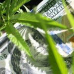 best marijuana stock to buy