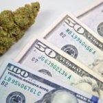 marijuana penny stock