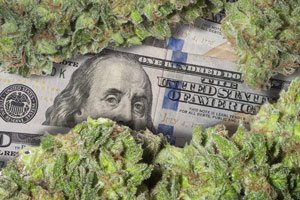 best marijuana stock to buy today