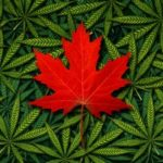 canadian marijuana penny stocks to watch