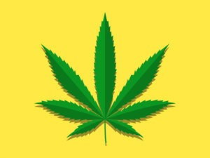 California's Bureau of Cannabis Control