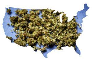 weed america