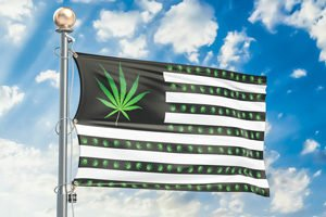 American flag with marijuana plant