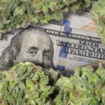 100 bill covered with weed