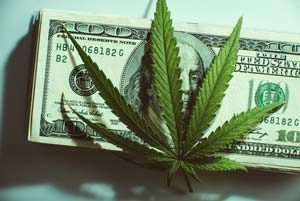 weed with 100 bill background