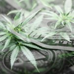 marijuana mergers and acquisitions