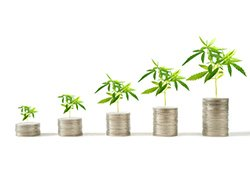 How Pot Stock Earnings Are Crushing Expectations