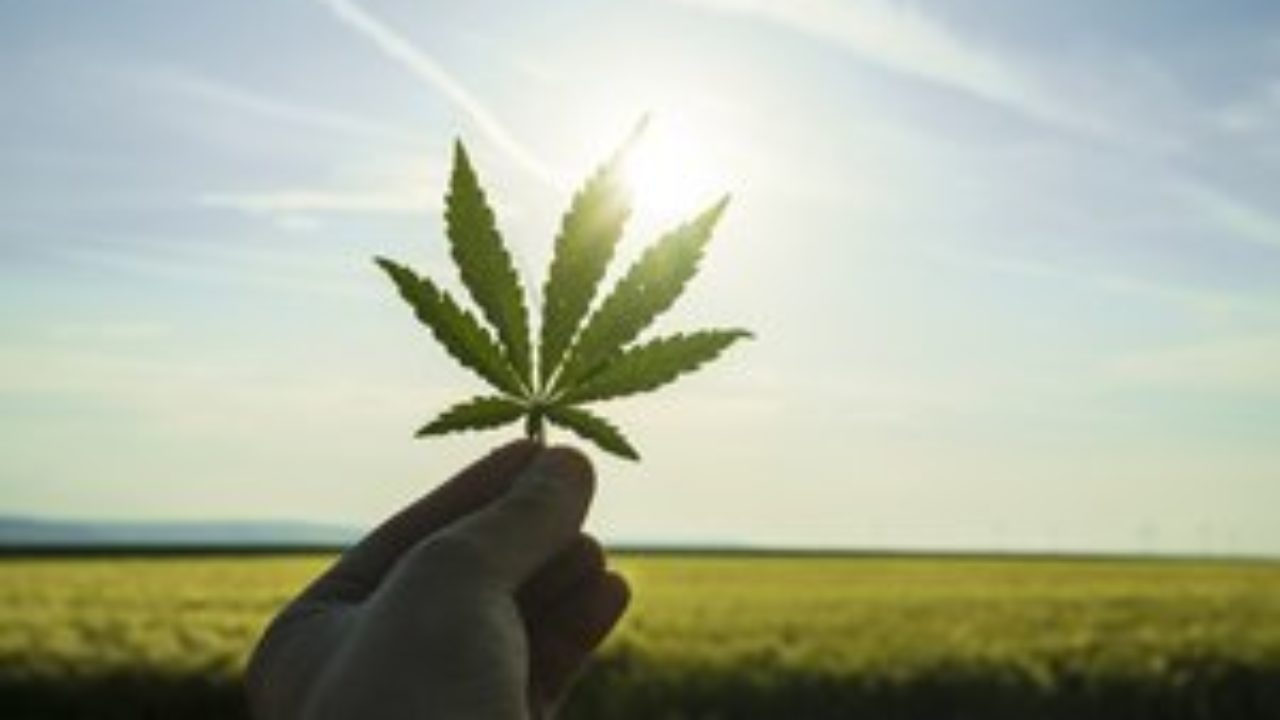 Here Are 3 Different Ways to Profit from Canopy Growth Stock