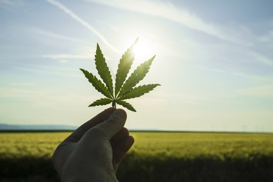 A hand holding a cannabis leaf toward the sky.