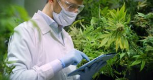Scientist surrounded by cannabis plants holding an iPad.