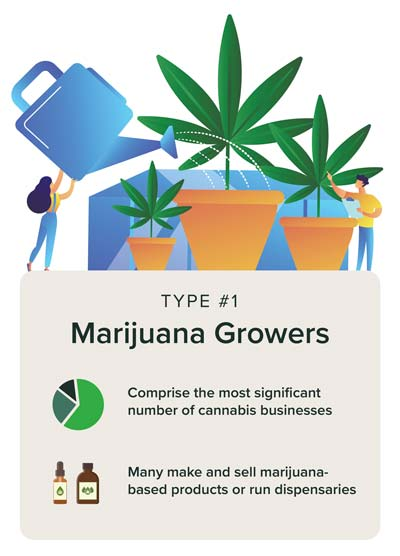 Marijuana growers watering plants for cannabis businesses.